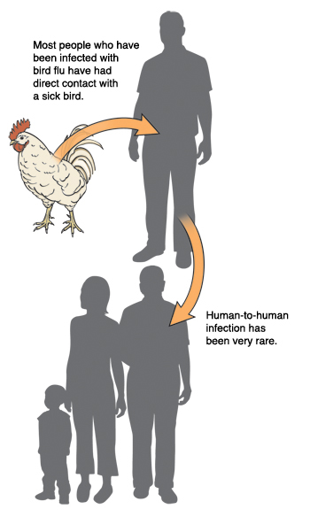 Chicken, man, and group of people. Most people who have been infected with bird flu have had direct contact with sick bird. Human-to-human infection has been very rare.