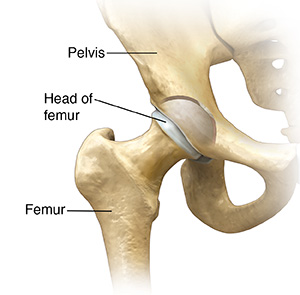 Front view of hip joint.