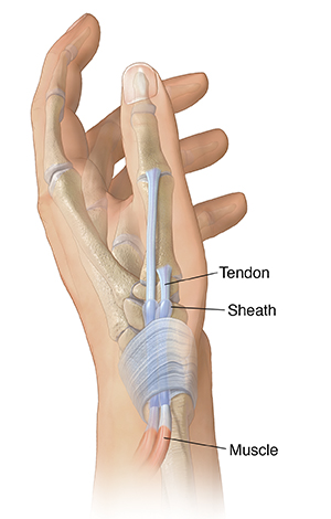 Side view of hand showing tendons in base of thumb.