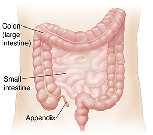Outline of abdomen showing small intestine and colon.